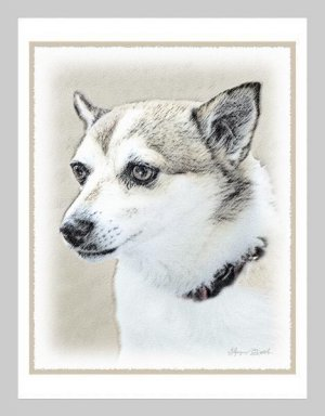 6 Norwegian Lundehund Note or Greeting Cards
