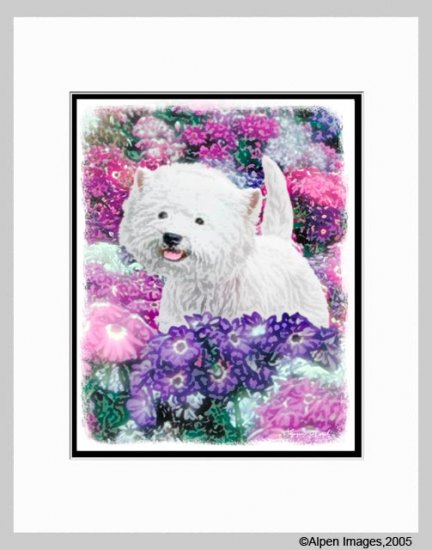 West Highland White Terrier Westie Print  Matted 11x14