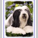 6 Bearded Collie Note or Greeting Cards