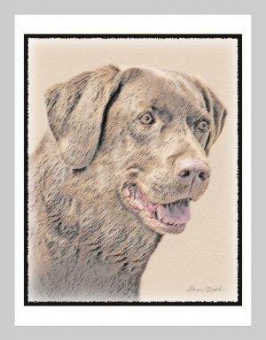 6 Chocolate Lab Labrador Retriever Note or Greeting Cards