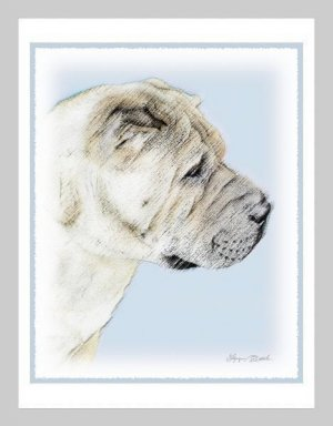 6 Shar Pei Note or Greeting Cards