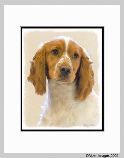 English Springer Spaniel Art Print Matted 11x14