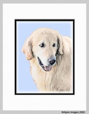 Golden Retriever Art Print Matted 11x14