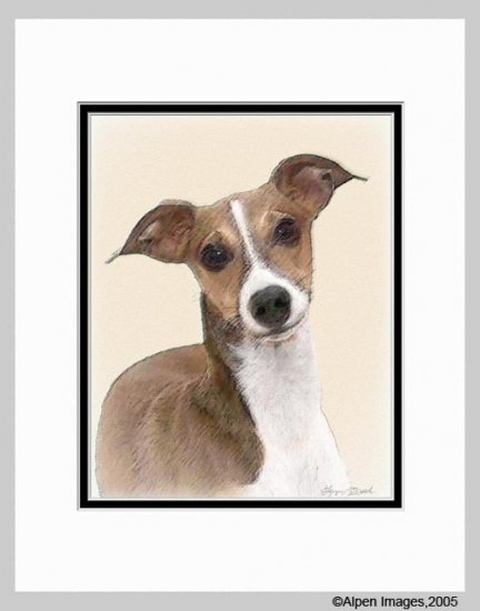 Italian Greyhound Art Print Matted 11x14