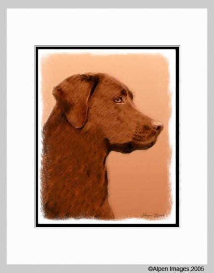 Chocolate Lab Labrador Retriever Art Print Matted 11x14