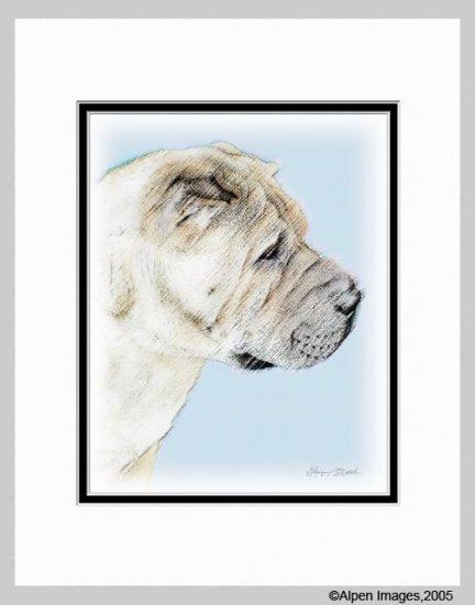 Shar Pei Art Print Matted 11x14