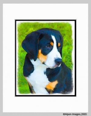 Bernese Mountain Dog Puppy Art Print Matted 11x14