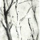 White Tree Monotype