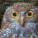 Amazing Owl Back to Nature montage limited signed coa 1-25
