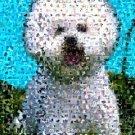 Amazing Bichon Frise fine art print Dog Montage limited signed coa 1-25