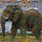 Amazing Elephant Nature montage pop art poster limited signed coa 1-25