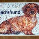 Amazing Dachshund Weener Weiner Dog Montage w/COA