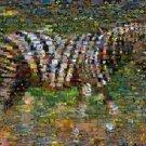 Amazing ZEBRA Wild Animals Montage limited art print