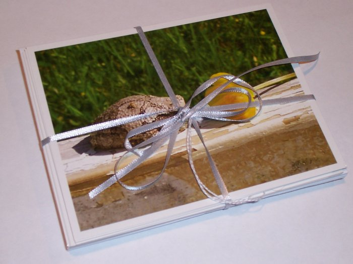 Toad and Buttercup photo postcard set (5)
