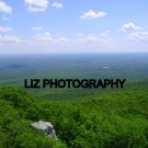 A hill top sea of green 4  by 6 inch print /Sam's Point in New York