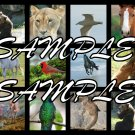 Animal Collage 1 emailed to you