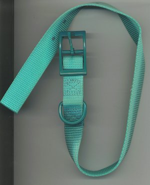 Teal one inch wide dog collar with metal buckle for size 16-20 inch neck