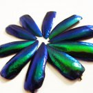 20 Exotic Jewel Beetle Elytra Wings for Beading or Embellishment
