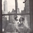 Lucky Famous Foundling Dog~ORPHAN TEXAS PUPPY~Life Mag