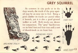 WHO WENT THERE Animal Tracking Tracks ID Guide SQUIRREL Raccoon CHIPMUNK Carroll Colby HB