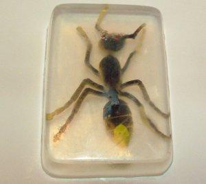Embedded Bugs Glycerin Soap