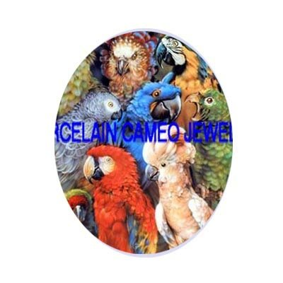MACAW PARROT AFRICAN GREY BIRD COLLAGE CAMEO PORCELAIN