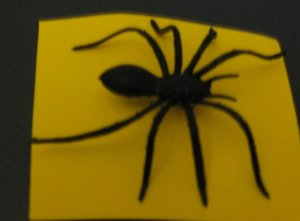 Black Spider Tie Tac Pins  for back to School Halloween Fun