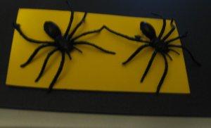Black Spider Earrings Post Halloween Club School Scary