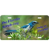 Design B - Florida Scrub-Jay Front Plate