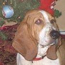 Train Your Dog or Puppy PDF Ebook