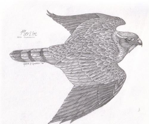Native American Art Pencil Drawing Merlin by Aaron Guerro