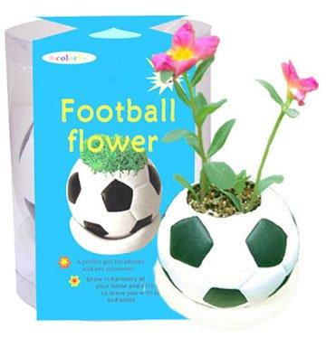 Football plants;Ceramic ball; Toy ball