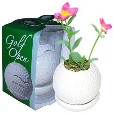 Mini plants;Ceramic Golf ball flowerpot; Toy Golf ball