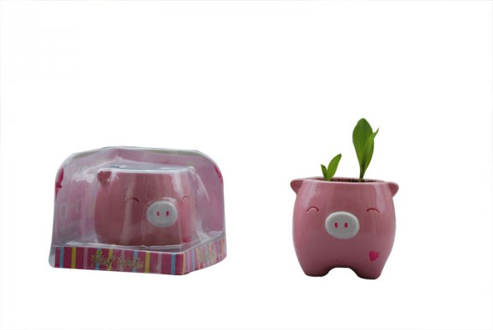 Piggy Plant;garden craft,home decoration(pink )