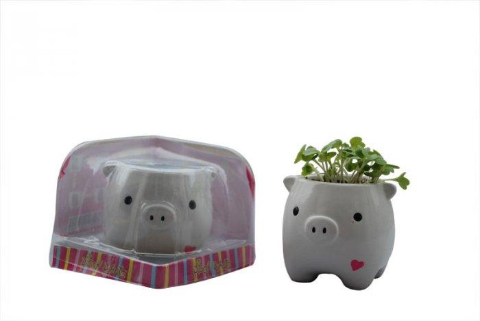 Piggy Plant;garden craft,home decoration(white)