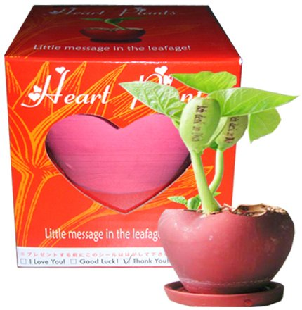 Heart-Shaped Garden Planters(GF-HPK)