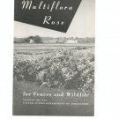 Vintage The Multiflora Rose Brochure by USDA Leaflet No. 374