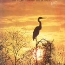 Everglades The Story Behind The Scenery By Jack de Golia 0916122577