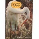 National Geographic School Bulletin May 1970 Elegant Egrets