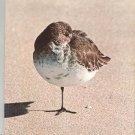 Vintage Audubon Magazine September 1977 Back Issue
