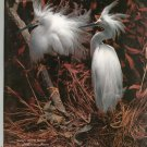 Smithsonian Magazine November 1988 Back Issue Not PDF Snowy Egrets