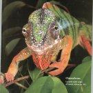 Smithsonian Magazine June 1990 Back Issue Not PDF Chameleons