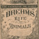 Vintage Brehm's Life Of Animals Part 8 A. N. Marquis Publishers Animals Of The World Not PDF