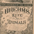 Vintage Brehm's Life Of Animals Part 4 A. N. Marquis Publishers Animals Of The World Not PDF