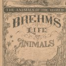 Vintage Brehm's Life Of Animals Part 24 A. N. Marquis Publishers Animals Of The World Not PDF