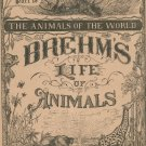 Vintage Brehm's Life Of Animals Part 18 A. N. Marquis Publishers Animals Of The World Not PDF