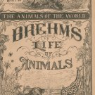 Vintage Brehm's Life Of Animals Part 15 A. N. Marquis Publishers Animals Of The World Not PDF