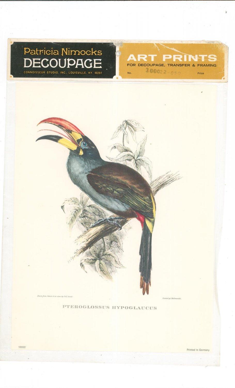 Patricia Nimocks Decoupage Art Print Bird 100022-050