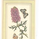 Patricia Nimocks Decoupage Art Print Flower With Butterfly 106045-100