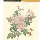 Patricia Nimocks Decoupage Art Print Flower Rosier de Candolle 106121-060